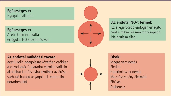 a magas vérnyomás fizikai aktivitással történő kezelése