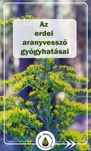 növényi vese magas vérnyomás