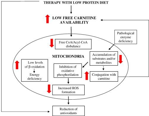 Az L-Karnitin és 11 jótékony hatása