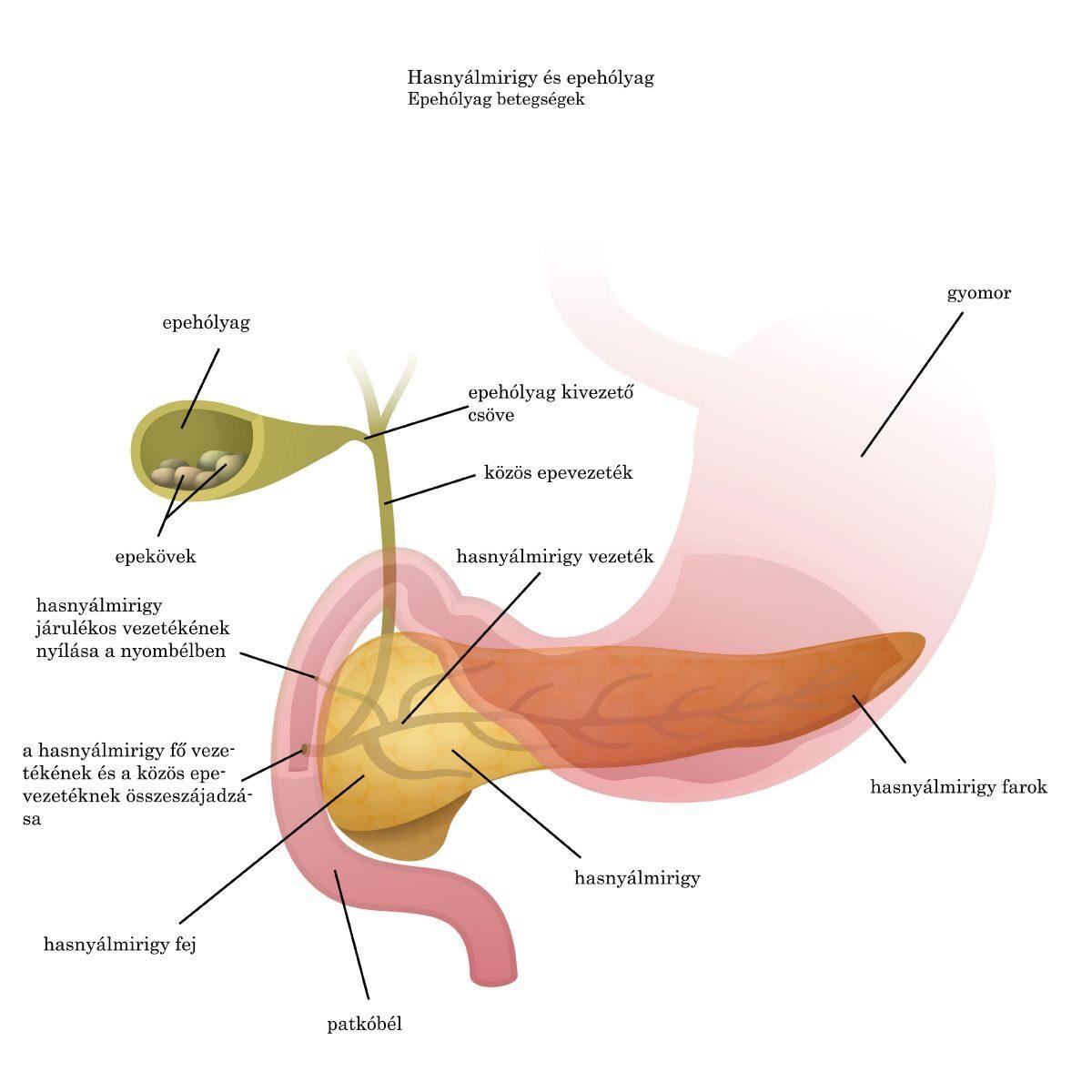 Epehólyag-gyulladás tünetei és kezelése
