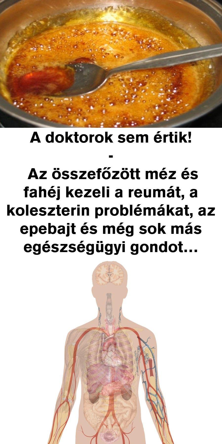 magas vérnyomású baktériumok)