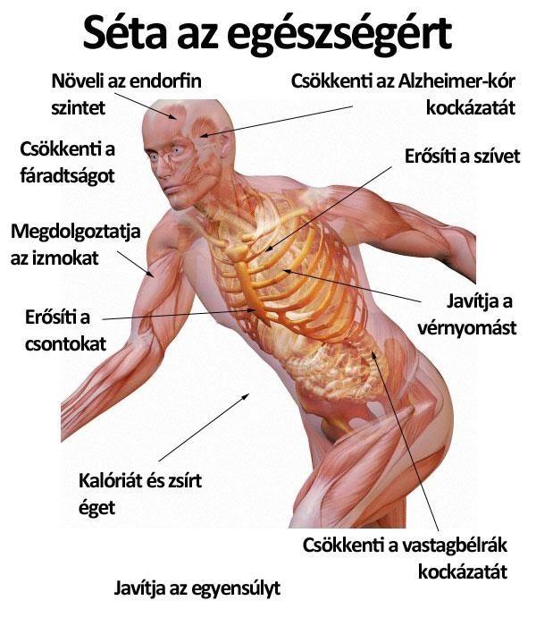 gyakorlatok magas vérnyomás fogyáshoz