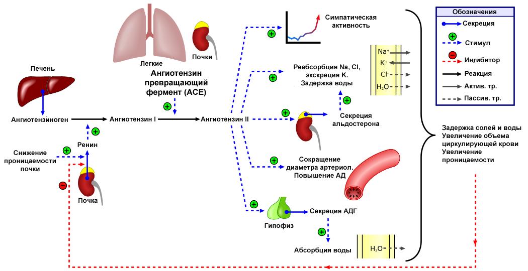 diuretikumok a magas vérnyomásért magas vérnyomás és tiroxin