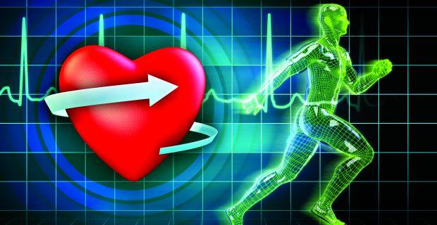 Hogyan erősítsük meg a szív és az erek izmait