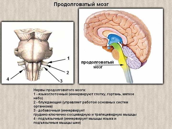 A nyaki osteochondrosis hipertónia: kezelés - Gerinc November