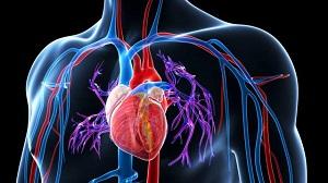 a vese magas vérnyomásának kezelése népi)