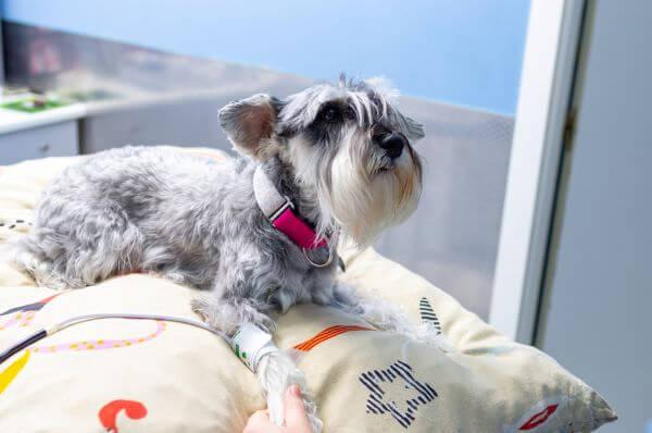 magas vérnyomás kutyák tünetei