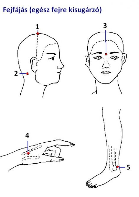 szervek vetülete az arcon   Preventative health, Essential oil chart, Massage therapy