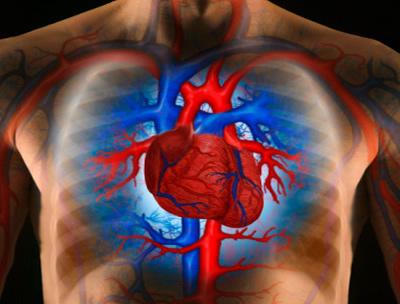 hogyan lehet megerősíteni a magas vérnyomásban szenvedő erek falát)