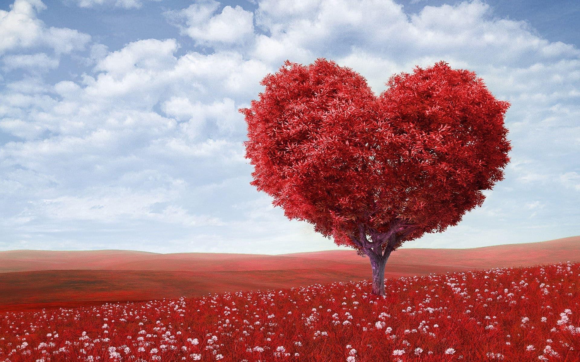 Mi mutatja a szív EKG-jét, dekódolva felnőttekben - Aritmia - November