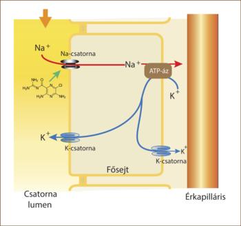 diuretikumok a hipertónia mellékhatásai paradicsom magas vérnyomás