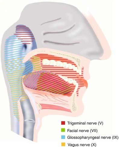 trigeminus hipertónia)