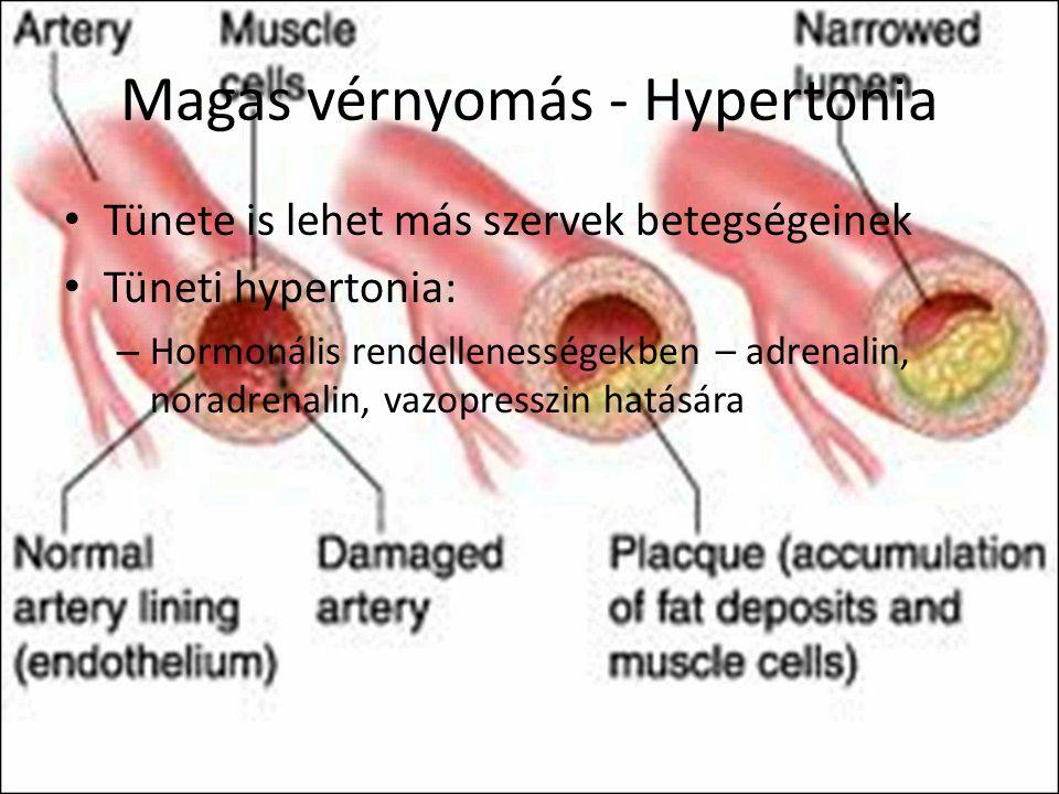 Hogy jut el a vér a testünk legtávolabbi pontjára is, majd vissza? - Meggyógyulnék blog