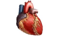 magas vérnyomás elleni elsősegély-gyógyszer magas vérnyomás gyógyszer tarka