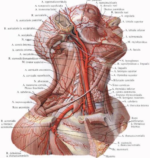 masszázs hipertónia hipotenzió esetén