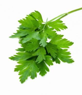 Koriander: a gyógyító fűszer - HáziPatika