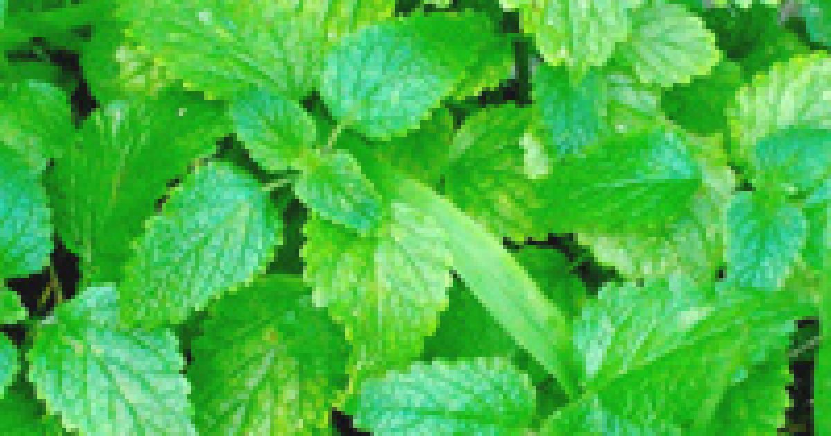 gyógynövények magas vérnyomás