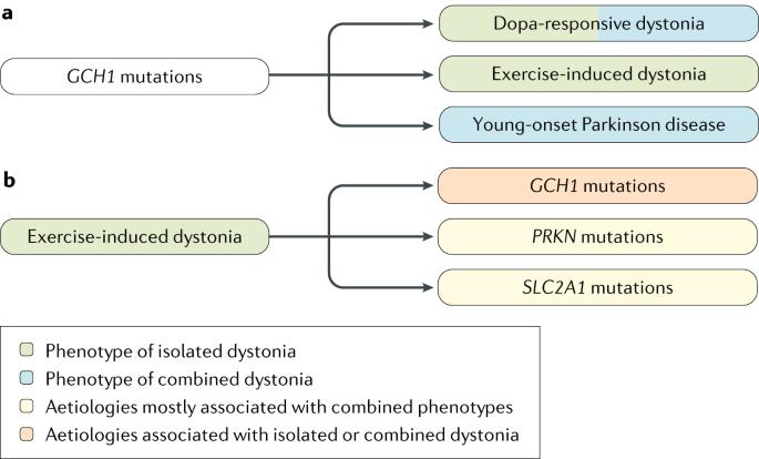 dystonia hipertónia tachycardia diéta kötőjel magas vérnyomás esetén